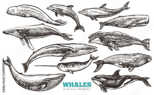 Whales sketch set Wallpaper Mural