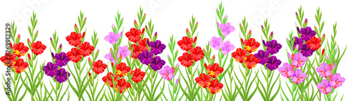 Cuadros en Lienzo Summer flower border with colorful blooming gladioli isolated on white backgroun