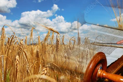 Photo Symbols of jewish holiday Shavuot Torah and wheat field