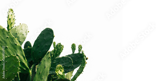 Canvas Prints Cactus green cactus on white background