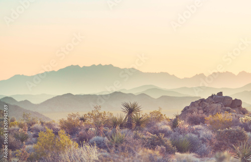 Arizona landscapes