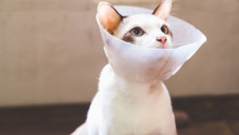 Cat With Collar, Cat After Surgery, Painful Pets, Collar Cone Translucent Recovery Plastic Protective Collar Anti-Bite Lick Wound Healing Safe Comfort Protection Cat Comfy Cone Neck Collar Cover