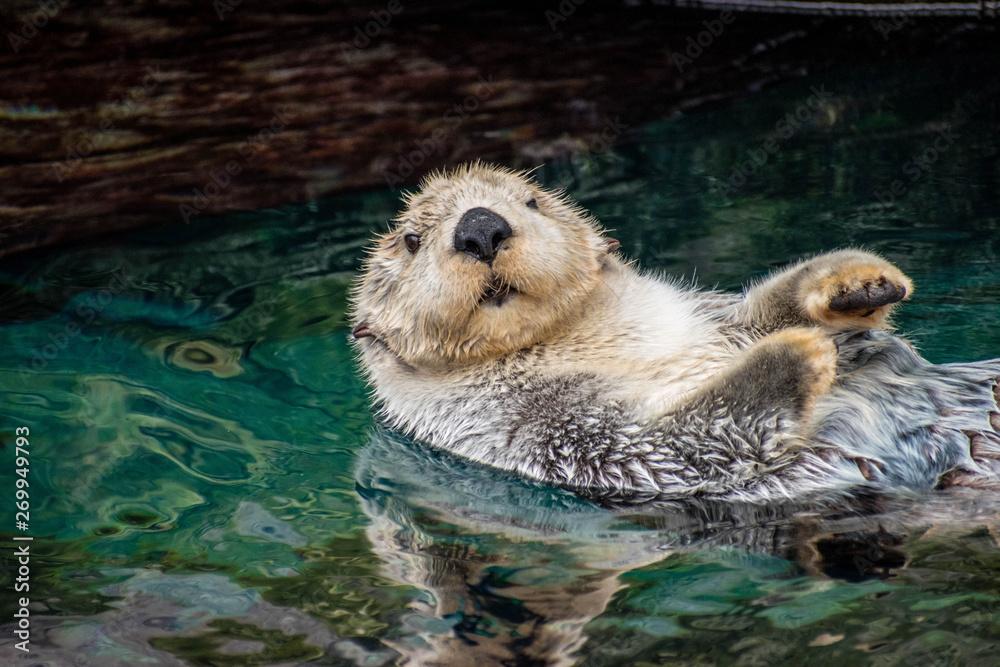 Fototapeta sea otter, Lisboa, March 2019