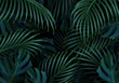 Branch palm realistic. Leaves and branches of palm trees. Tropical leaf background. Green foliage, tropic leaves pattern. vector illustration