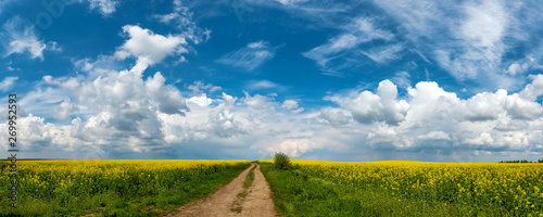 Foto auf Leinwand Landschaft Road in rield of yellow rapeseed against and blue sky