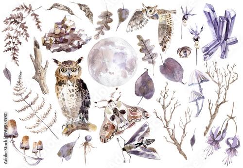 Keuken foto achterwand Uilen cartoon Watercolor mystical collection. Owls, crystal, butterflies, mushrooms and plants.