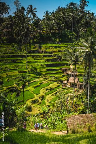 Tuinposter Wijngaard Rice field in Bali, Indonesia