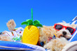 Leinwandbild Motiv dog on the beach