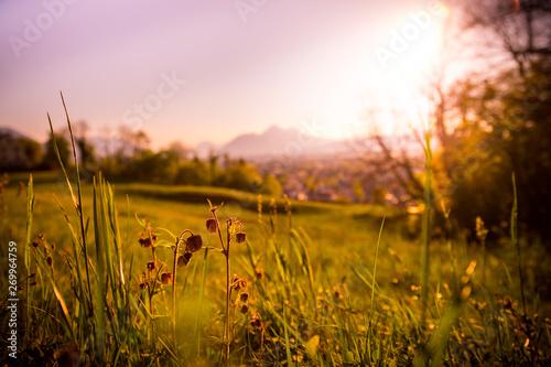 Wall Murals Light pink Idyllic golden landscape evening scenery: Summer meadow, sundown.