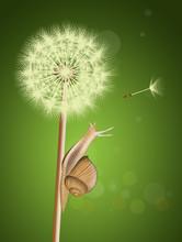 Snail On Dandelion