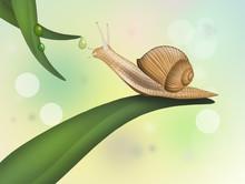Illustration Of Snail On Leaf