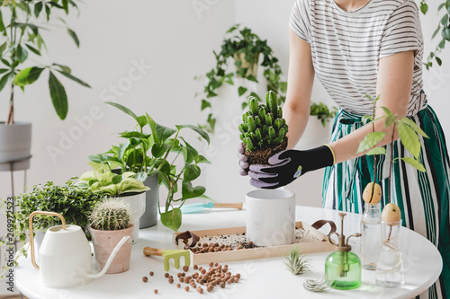 Woman gardeners  transplanting plant in ceramic pots on the white wooden table Fototapet