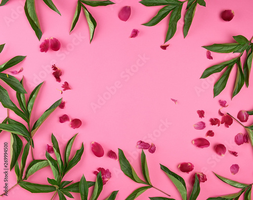 red petals and green peony leaves on a pink background