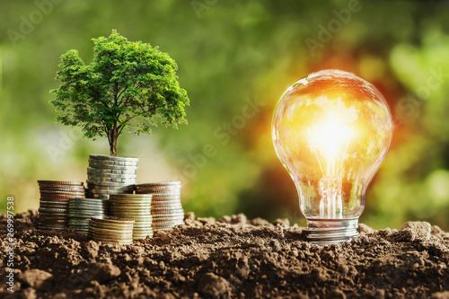 Fototapeta tree growing on coins and light bulb. concept saving money with energy obraz
