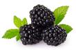 Leinwandbild Motiv Fresh blackberry on white background