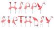 Hand drawn watercolor flamingos. Flamingo Happy Birthday lettering