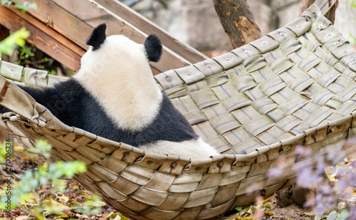 A giant panda sits in a bed in an imperial manner Wallpaper Mural