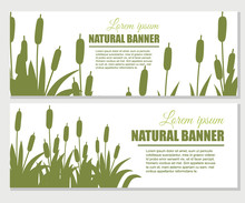 Reeds In Green Grass. Reed Plant. Green Swamp Cane Grass. Flat Vector Illustration On White Background. Clip Art For Decorate Swamp. Advertising Flyer Or Greetings Card Design