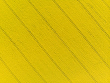 Top Down Aerial View Of Yellow Canola Field