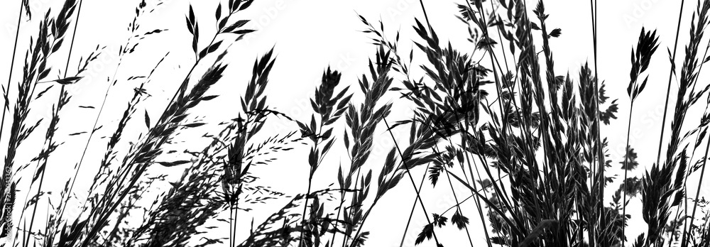 Fototapety, obrazy: silhouette of grass - black shape isolated on a white
