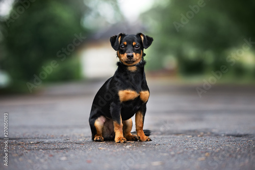 Foto  mixed breed dog sitting outdoors on the road