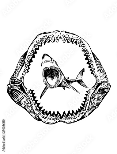 Valokuvatapetti Graphical shark in megalodon jaw isolated on white backgrond,vector sea-food ill