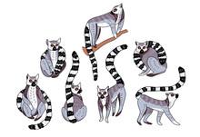 Cute Doodle Ring-tailed Lemurs