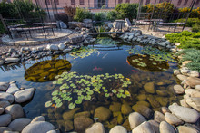 Beautiful Small Pond With Fishes