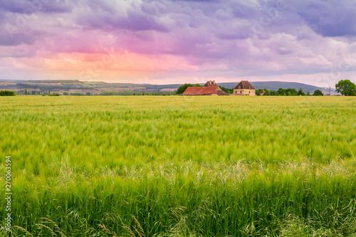 Spoed Fotobehang Pistache champ de blé