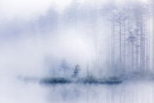 Trees And The Misty Pond