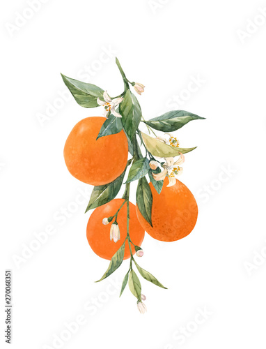 Fényképezés Watercolor citrus fruits illustration