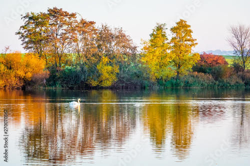 Foto auf Leinwand Honig Multicolored trees are displayed in the transparent water of the river in the autumn_