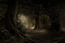 Tropical Forest In Darkness