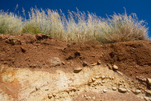 Soil Profile Under Grassland