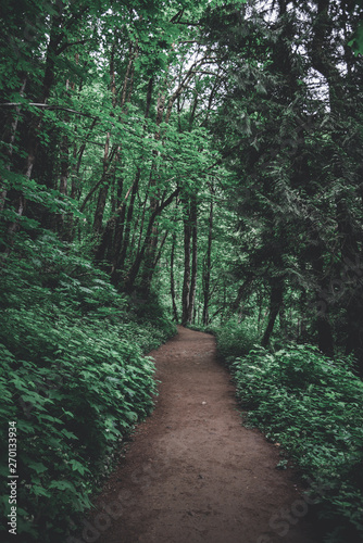 Hiking trail path through lush Pacific Northwest forest in Oregon - fototapety na wymiar