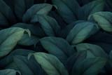 Tle tropikalnych liści - 270134727