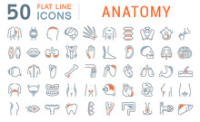 Set Vector Line Icons Of Anatomy