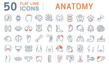 Set Vector Line Icons Of Anatomy