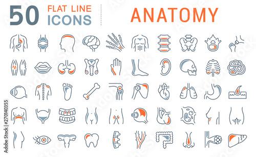 Slika na platnu Set Vector Line Icons of Anatomy