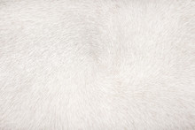 White Or Gray Cow Fur Patterns Abstract Texture For Background