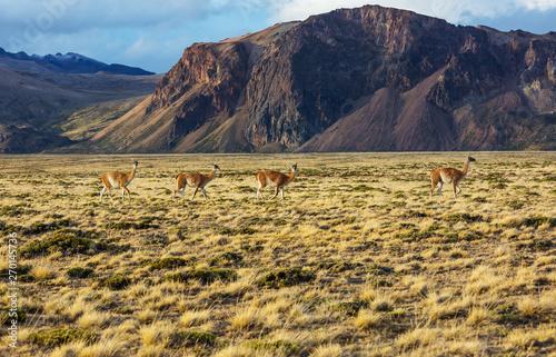 Fotomural Perito Moreno Park