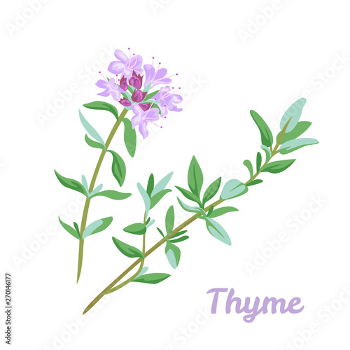 Fotografía Blooming thyme icon isolated on white background