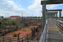 Forth Worth Historic Stockyards
