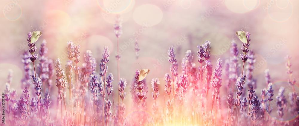 Fototapety, obrazy: White butterflies on beautiful lavender flower