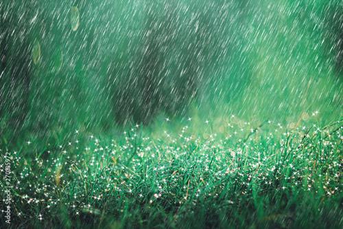 Montage in der Fensternische Garten Heavy rain shower on meadow background with sparkle and bokeh. Raining in nature backdrop.