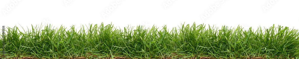 Fototapety, obrazy: Fresh green grass isolated against a white background