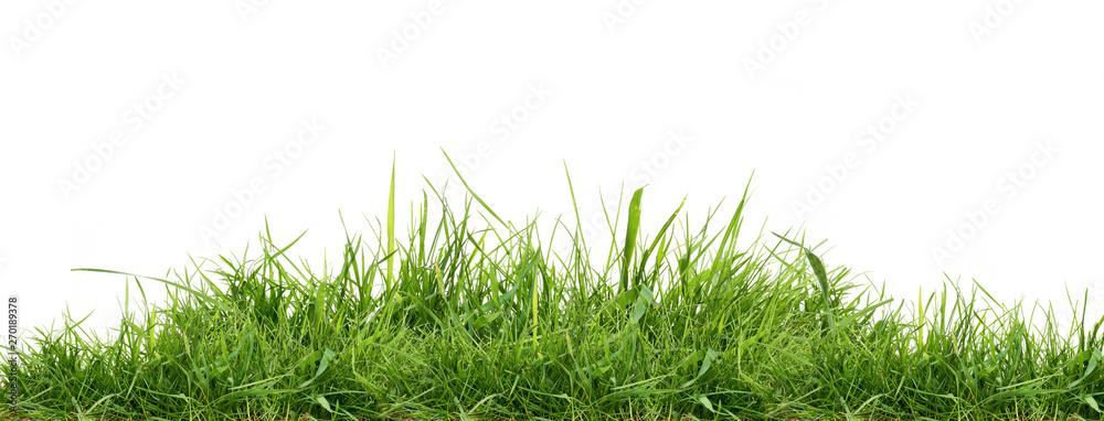 Fototapeta Fresh green grass isolated against a white background