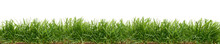 Fresh Green Grass Isolated Aga...