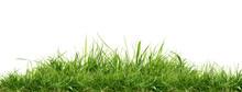 Fresh Green Grass Isolated Aga...