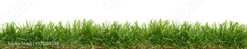 Carta da parati  Fresh green grass isolated against a white background